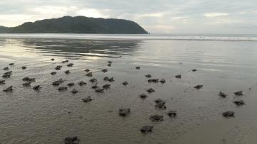 tortuguitas al mar