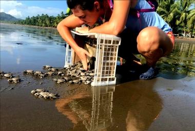 liberando a las tortugas