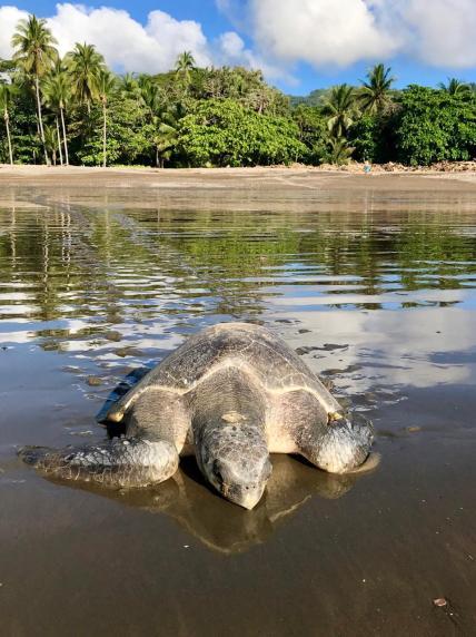 fotaza tortugas